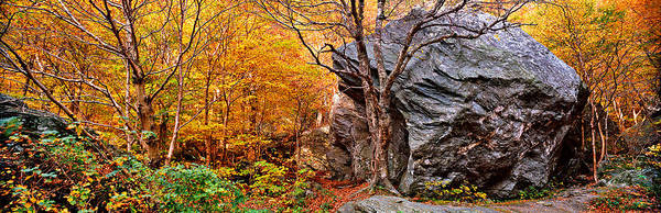 Autumn In New England Photograph - Big Boulder In A Forest, Stowe by Panoramic Images