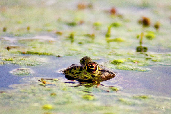 Bull Frog Photograph - Big Bubba by Scott Pellegrin
