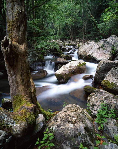 Photograph - Big Creek Cascade by Ray Mathis