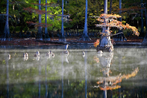 Wildbird Photograph - Big Cypress Morning Reflections by Lana Trussell
