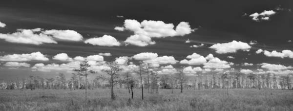Everglades Photograph - Big Cypress Prairie by Jon Glaser