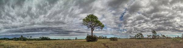 Photograph - Big Cypress by Rudy Umans