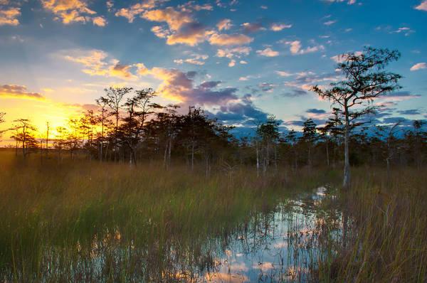 Wall Art - Photograph - Big Cypress Sunrise by Rich Leighton