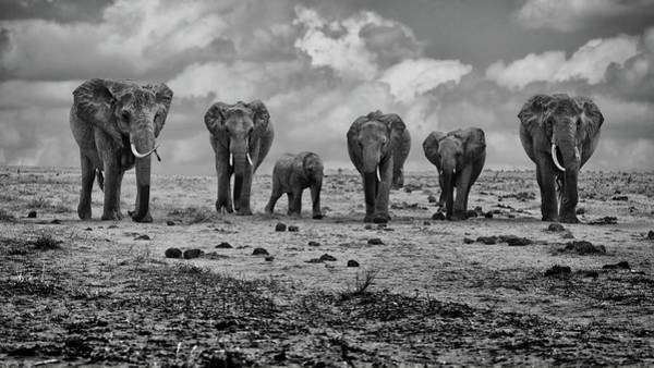 Herd Photograph - Big Family by Marcel Rebro