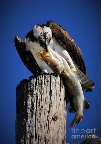 Fish Eagle Photograph - Big Fish by Quinn Sedam