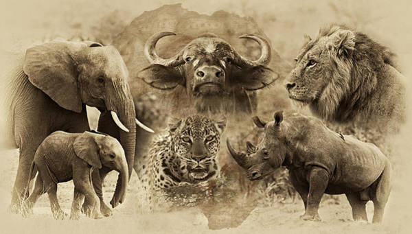 Untamed Photograph - Big Five - Untamed Africa by Basie Van Zyl