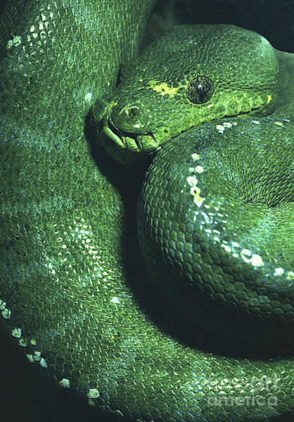 Photograph - Big Green Eating Machine by Paul W Faust -  Impressions of Light