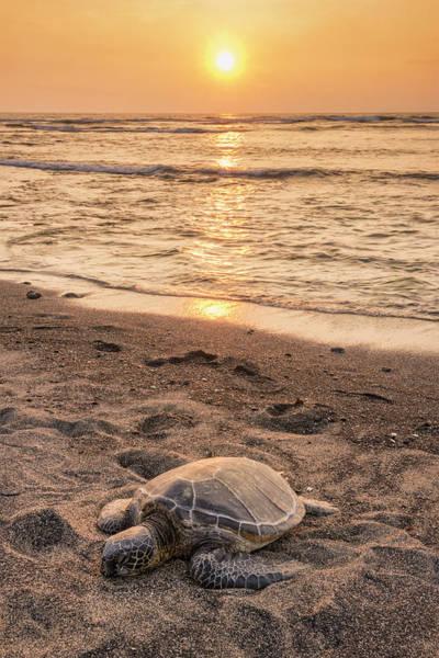 Turtle Photograph - Big Island by Christian Heeb