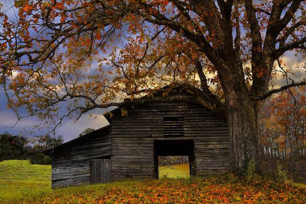 Nantahala Photograph - Big Oak by Debra and Dave Vanderlaan