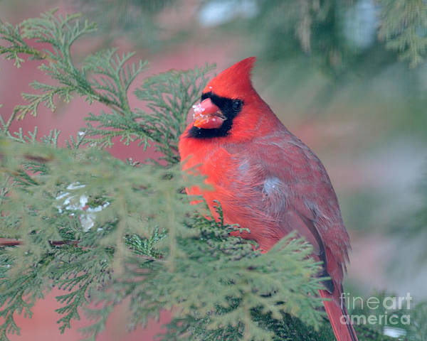 Photograph - Big Red by Craig Leaper