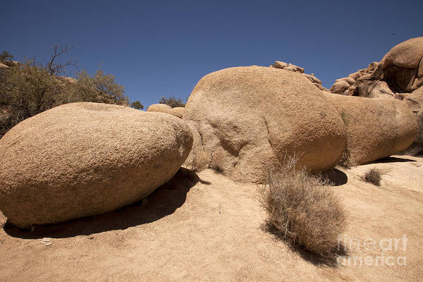 Wall Art - Photograph - Big Rock by Amanda Barcon