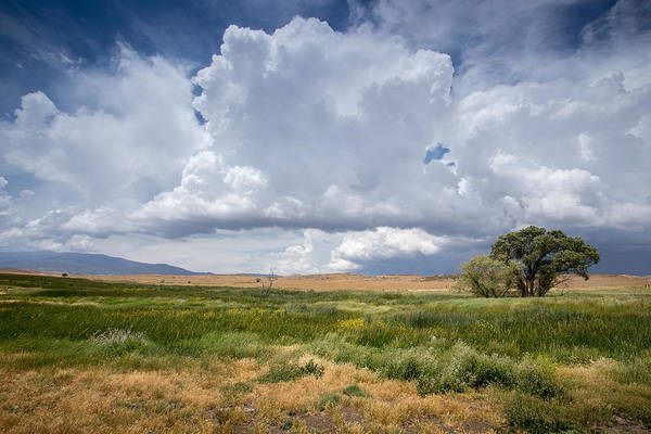 Big Sky Photograph - Big Sky And Tree by Peter Tellone