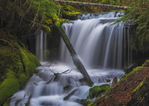 Photograph - Big Spring Creek Falls - Middle by Loree Johnson