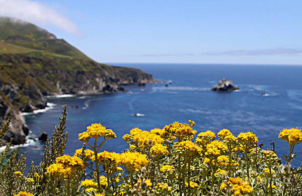 Photograph - Big Sur Loves Yellow By Diana Sainz by Diana Raquel Sainz