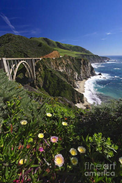Wall Art - Photograph - Big Sur Wildflower Bloom  by George Oze