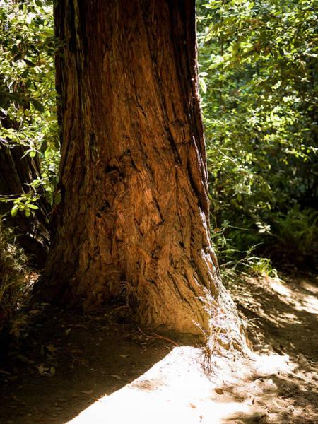 Photograph - Big Tree by Alexander Fedin