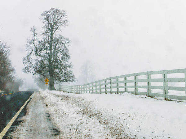 Photograph - Big Tree In Snow Storm by Louis Dallara