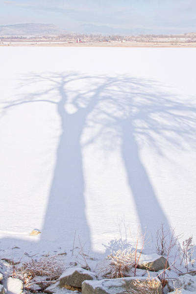 Photograph - Big Tree Shadow Portrait by James BO Insogna