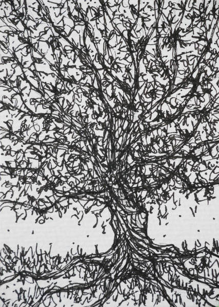 Olive Branch Drawing - Big Tree Stable by Benjavisa Ruangvaree