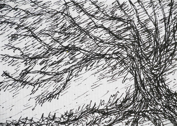 Olive Branch Drawing - Big Tree Windy by Benjavisa Ruangvaree