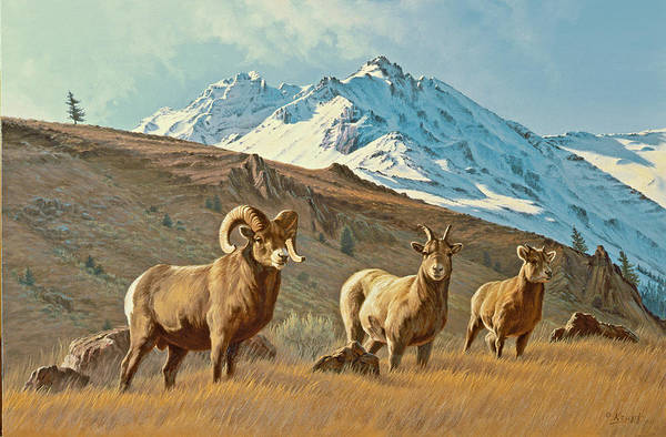 Ram Painting - Bighorn Below Electric Peak by Paul Krapf