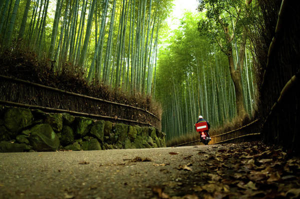Helmet Photograph - Bike Running Through Bamboo Grove by Marser