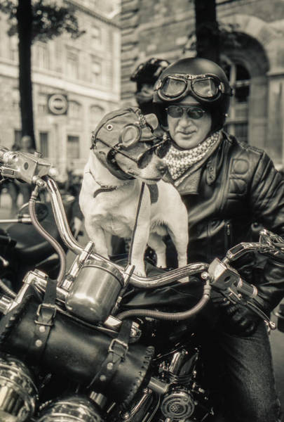 Photograph - Biker Dog And Freind by Matthew Pace
