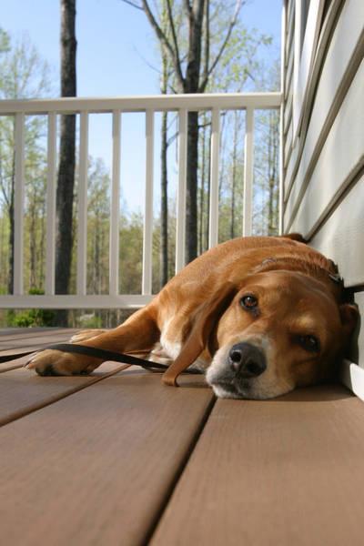 North Carolina Wall Art - Photograph - Bill's Dog by Frank Savarese