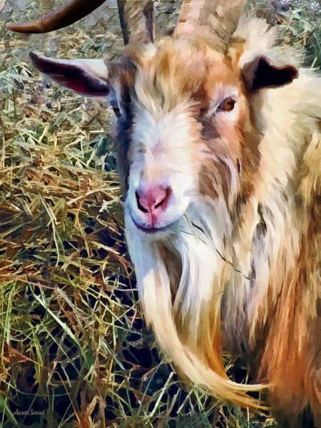 Photograph - Billy Goat Closeup by Susan Savad