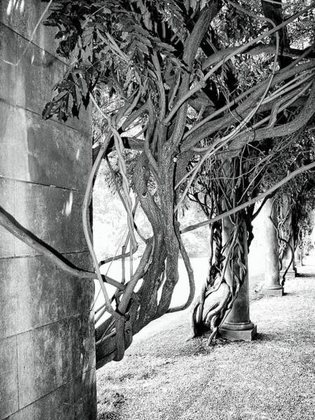 Asheville Wall Art - Photograph - Biltmore Arbor Asheville Nc by William Dey