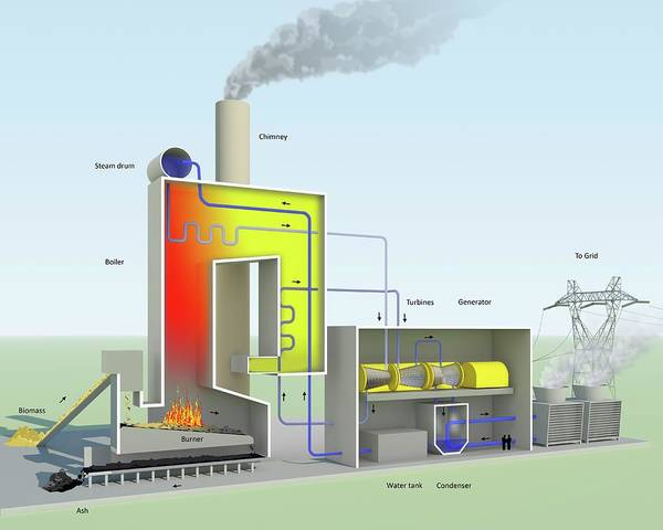 Condenser Wall Art - Photograph - Biomass-fired Power Station by Science Photo Library
