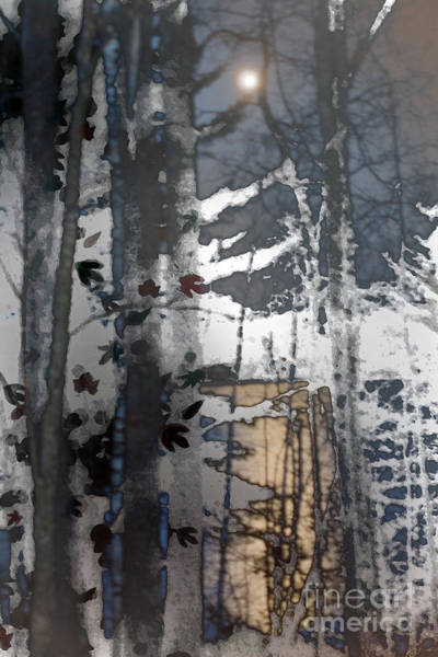 Wall Art - Photograph - Birch By Moonlight by Nancy TeWinkel Lauren