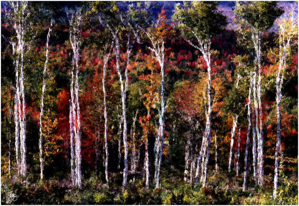 Photograph - Birch Tapestry by Wayne King