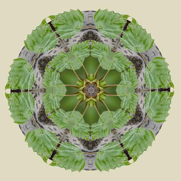 Photograph - Birch Tree Mandala by Beth Sawickie