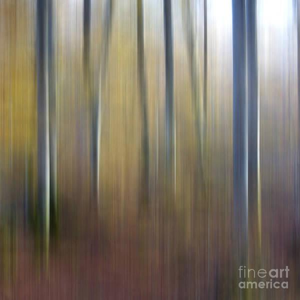 Out Of Focus Wall Art - Photograph - Birch Trees. Abstract. Blurred by Bernard Jaubert