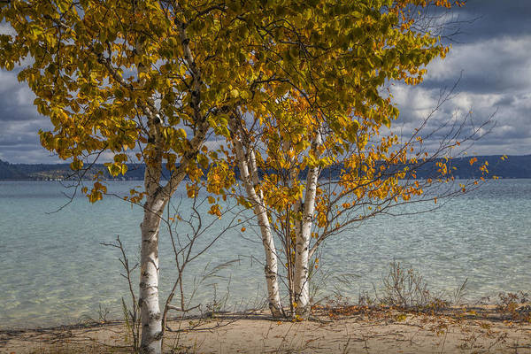 Photograph - Birch Trees Along The Shore Of Crystal Lake by Randall Nyhof