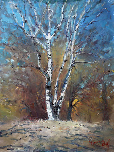 Birches Painting - Birch Trees by Ylli Haruni