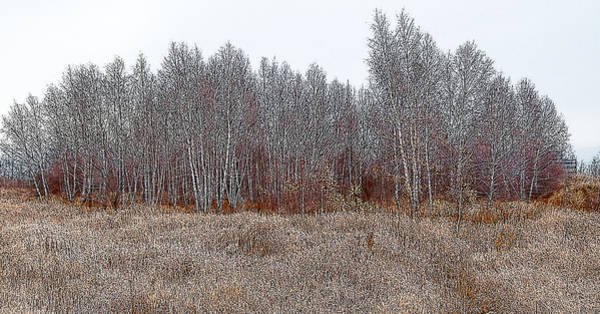 Photograph - Birch Woods At The Edge Of Town by Rob Huntley