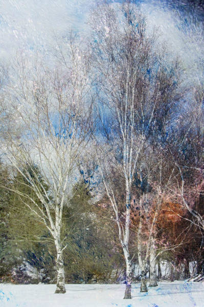 Digital Art - Birches Winter And Abstract Painting 1 by Anita Burgermeister