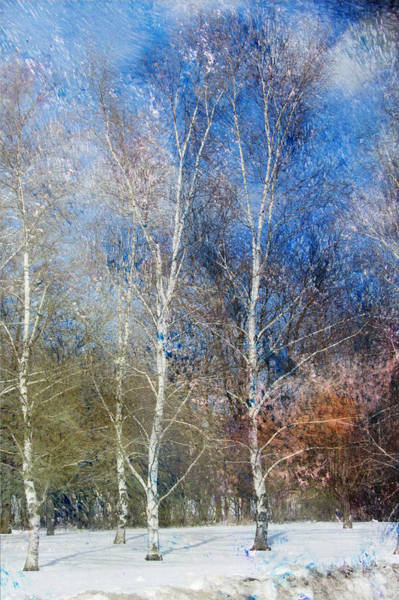 Digital Art - Birches Winter And Abstract Painting 2 by Anita Burgermeister