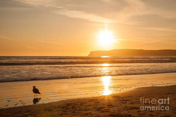 Art Print featuring the photograph Bird And His Sunset by John Wadleigh