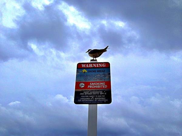 Photograph - Bird At The Beach by Chris Montcalmo
