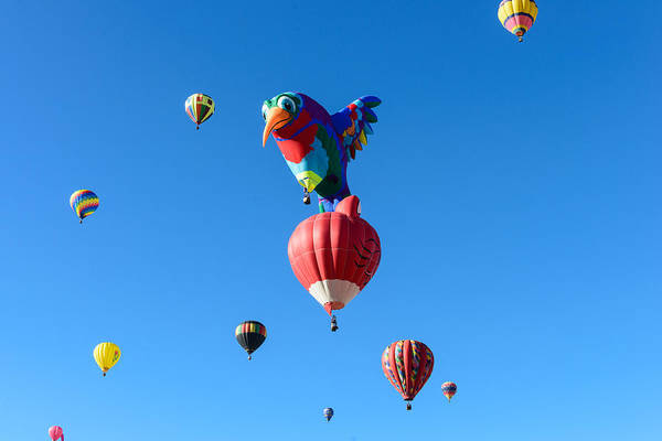 Photograph - Bird Balloon by John Johnson
