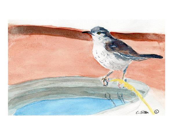 Painting - Bird Bath by C Sitton