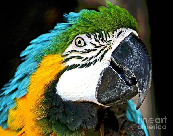 Photograph - Bird Champ by Larry Oskin