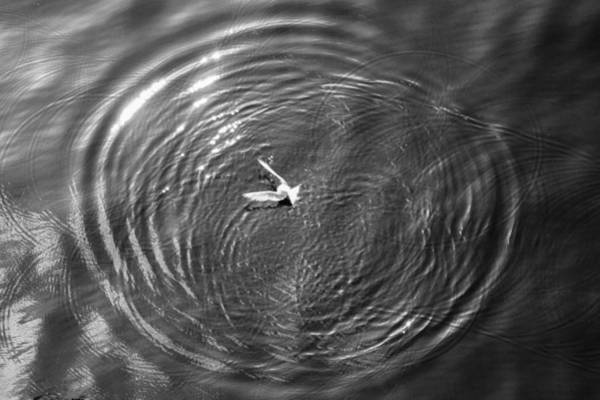 Photograph - Bird Chasing Bait by Gregory Daley  MPSA
