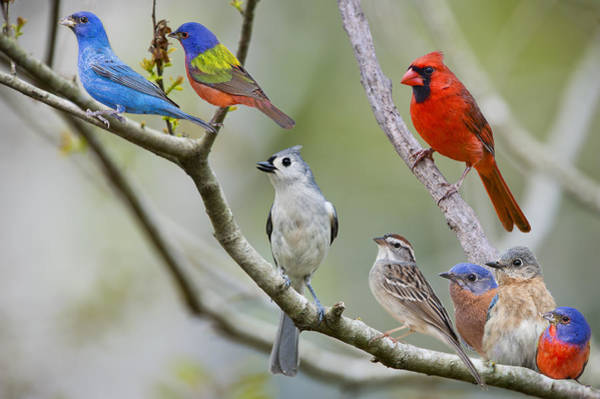 White-throated Sparrow Photograph - Bird City by Bonnie Barry