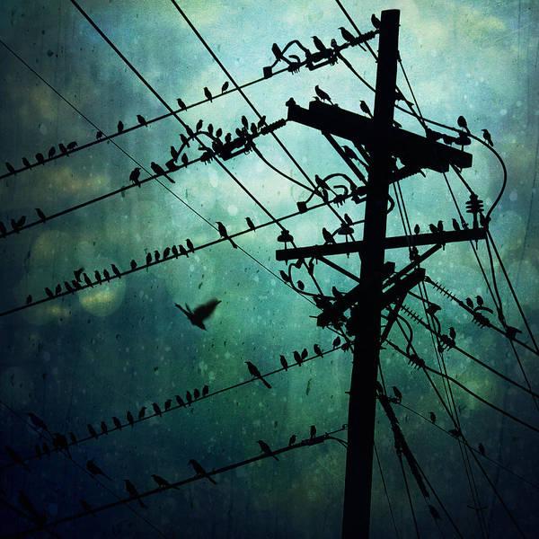 Wall Art - Photograph - Bird City by Trish Mistric