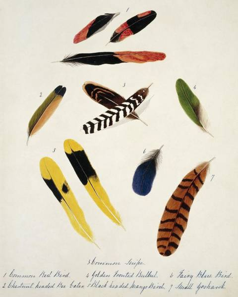Biodiverse Wall Art - Photograph - Bird Feathers From India by Natural History Museum, London/science Photo Library