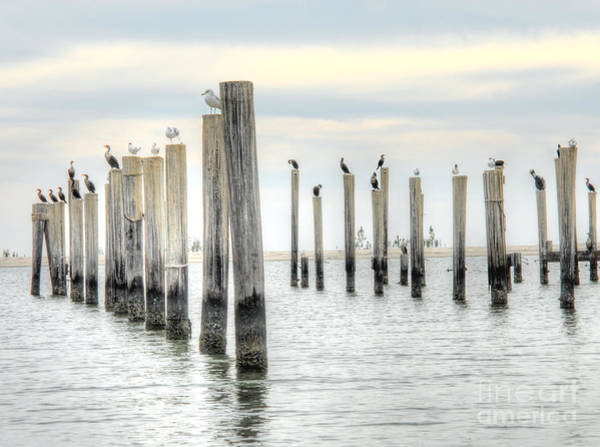 Photograph - Bird Haven by Anthony Wilkening